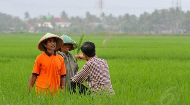 Said Didu Tanya Jokowi: Presiden Mana yang Ngintip Pohon Padi dan Masuk Gorong-gorong?