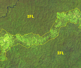 Intact Forest Landscapes (Credit: intactforests.org) Click to Enlarge.