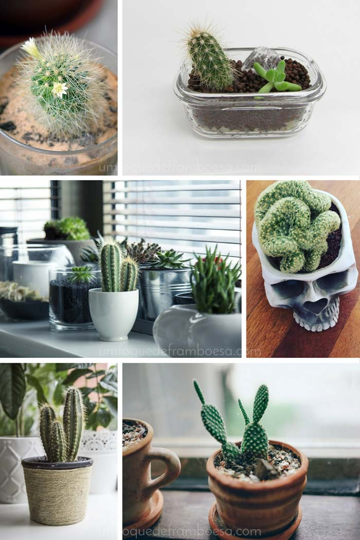 Inspirações de decoração com cactos em vasos inusitados e em vasos de vidro