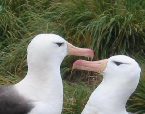 animals unique albatross bird