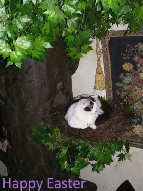 Tall Cat Trees for Large Cats