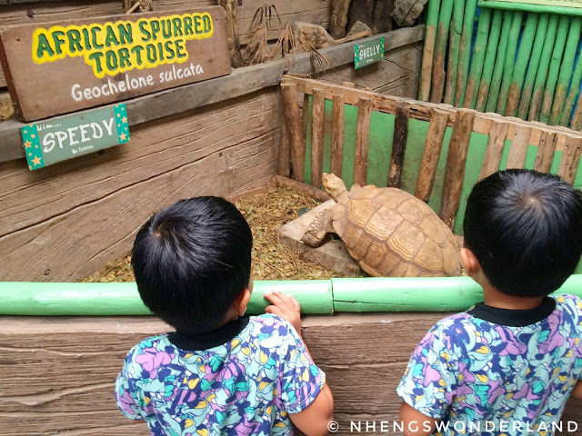 twinboys-at-ark-avilon-zoo