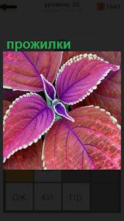 1100 слов на листочке бардового цвета видны прожилки 35 уровень