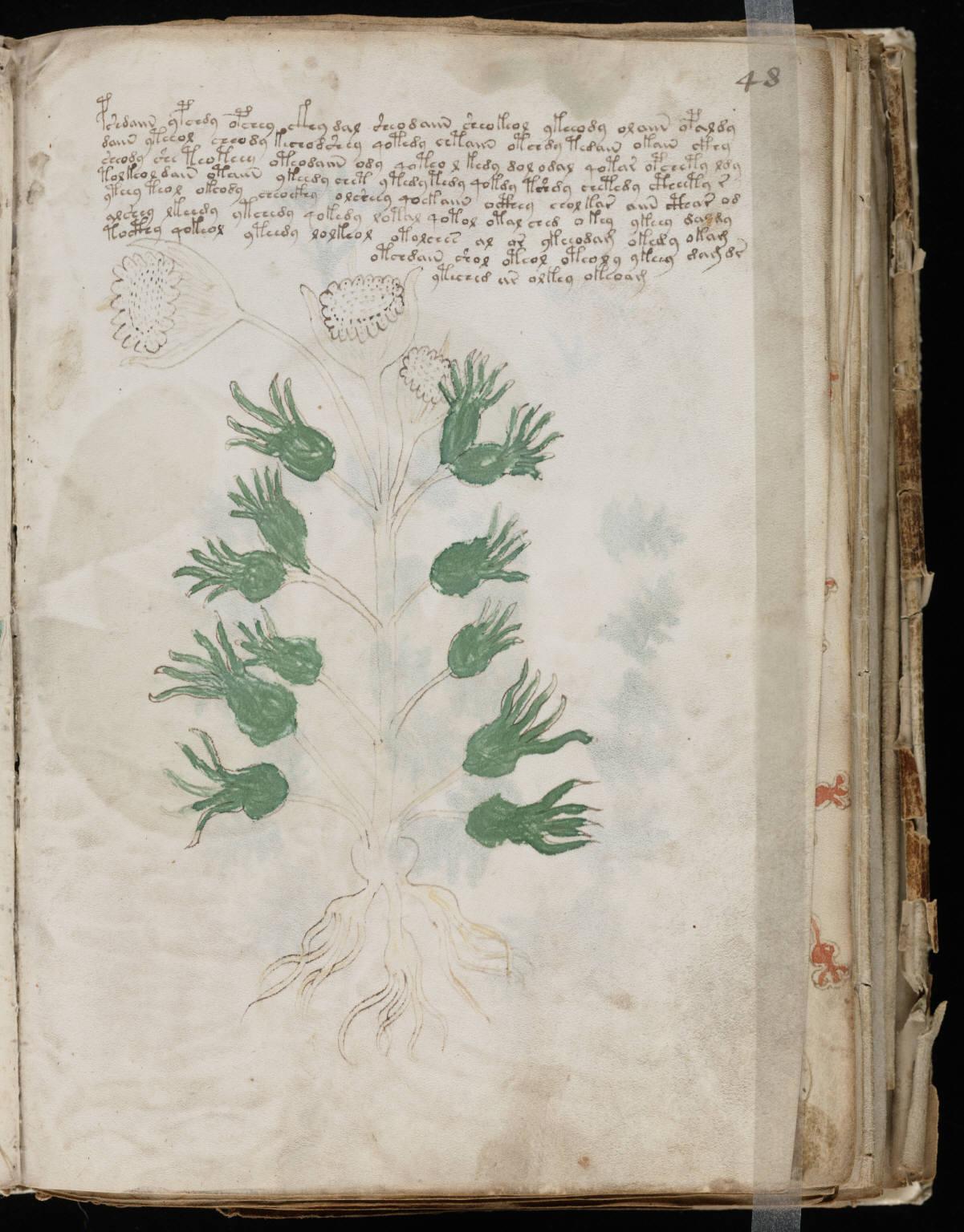 manuscrito093
