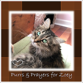 Zoey, get well pretty girl