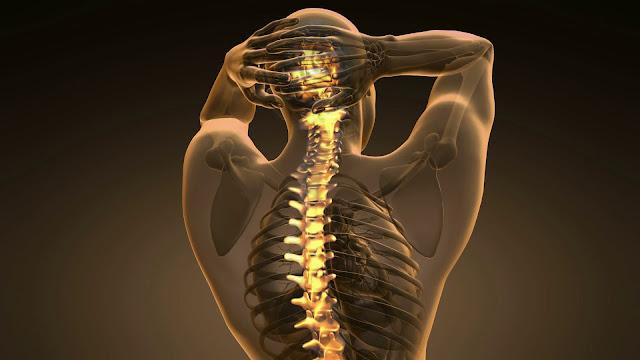 Tulang Anggota Gerak