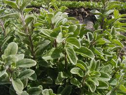 10 φυτά που μειώνουν τον κίνδυνο εμφάνισης διαβήτη