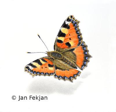 Bilde av digigrafiet 'Neslesommerfugl'. Digitalt trykk laget på bakgrunn av maleri av sommerfugl. Illustrasjon av Neslesommerfugl (det latinske navnet er Nymphalis urticae eller Aglais urticae).  Hovedmotivet er en oransje sommerfugl  med mørke flekker, som sitter på en nøytral hvit bakgrunn. Bildet er nærmest kvadratisk.