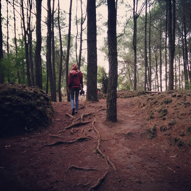 foto hutan pinus imogiri jogja