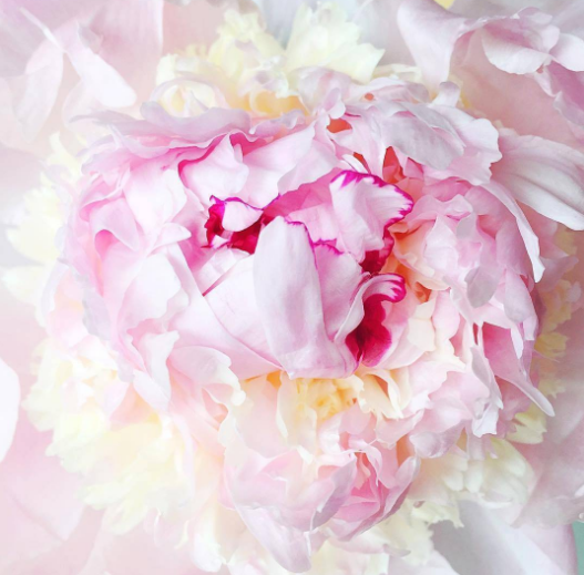 petal blooms pink by @abeautifulmess
