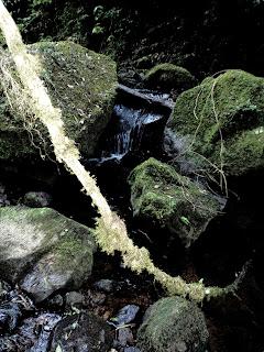 Pedras e Obstáculos no Meio da  Trilha para As Gêmeas Gigantes, Parque das 8 Cachoeiras, São Francisco de Paula
