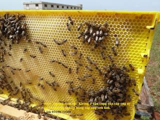Sáp ong trong tổ ong