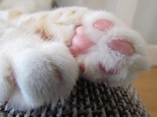 Haustiere Katzen