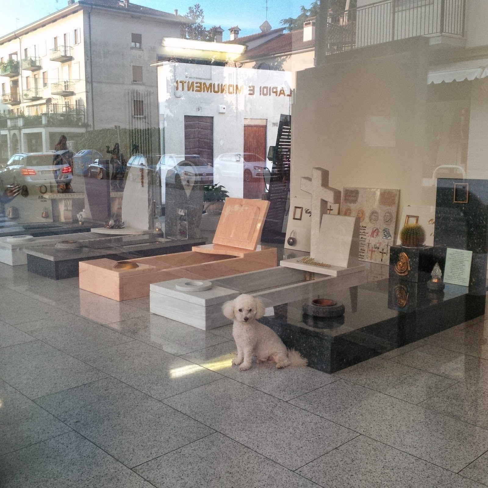 A cute little dog spends his days in this funeral shop