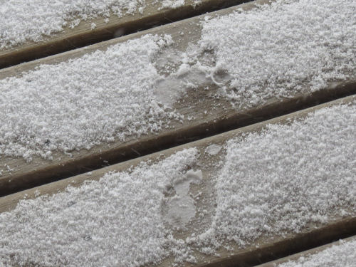 bare footprint in snow