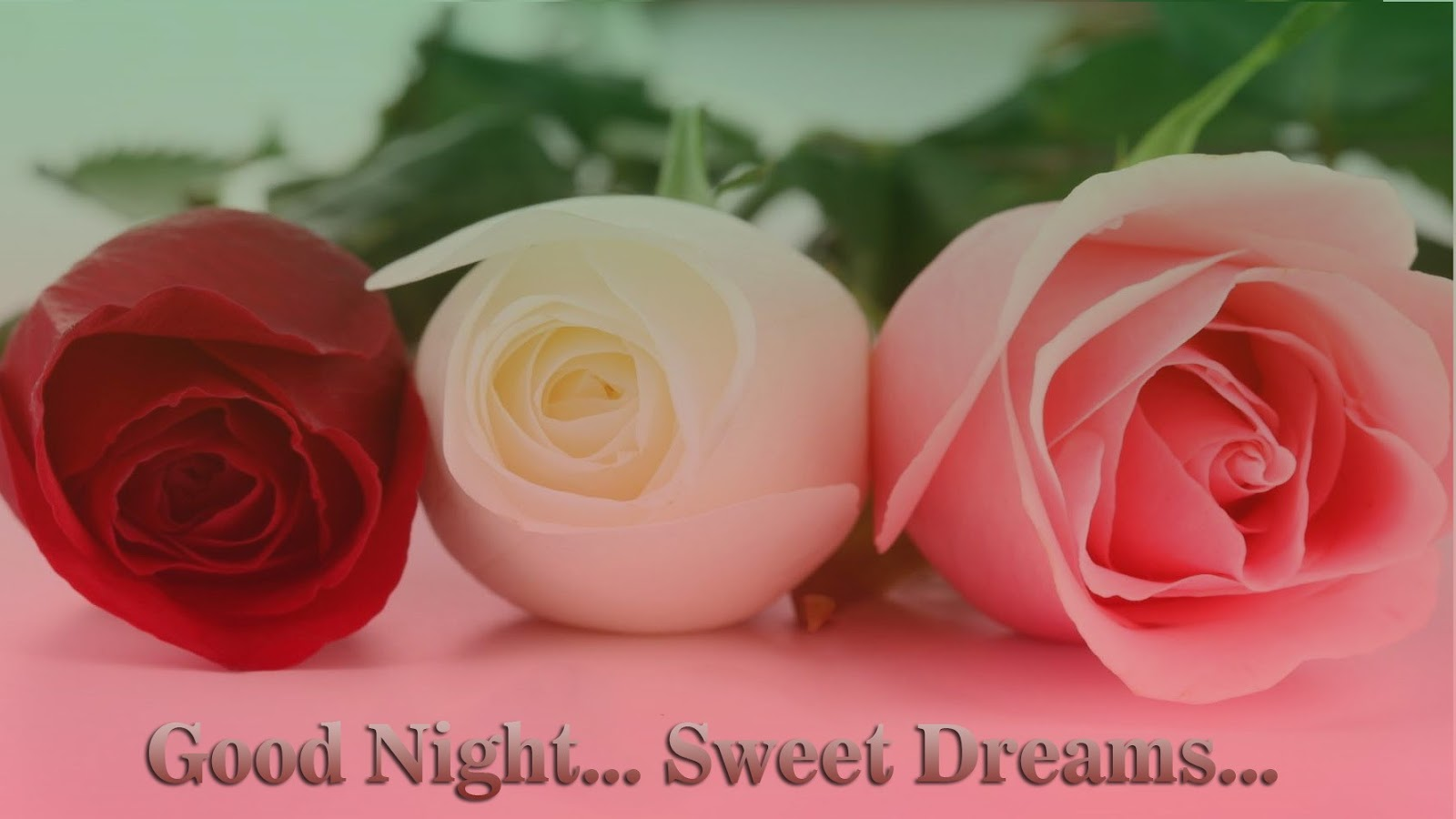 Red Rose Images Love Hd Good Night - Wallpaperzen org