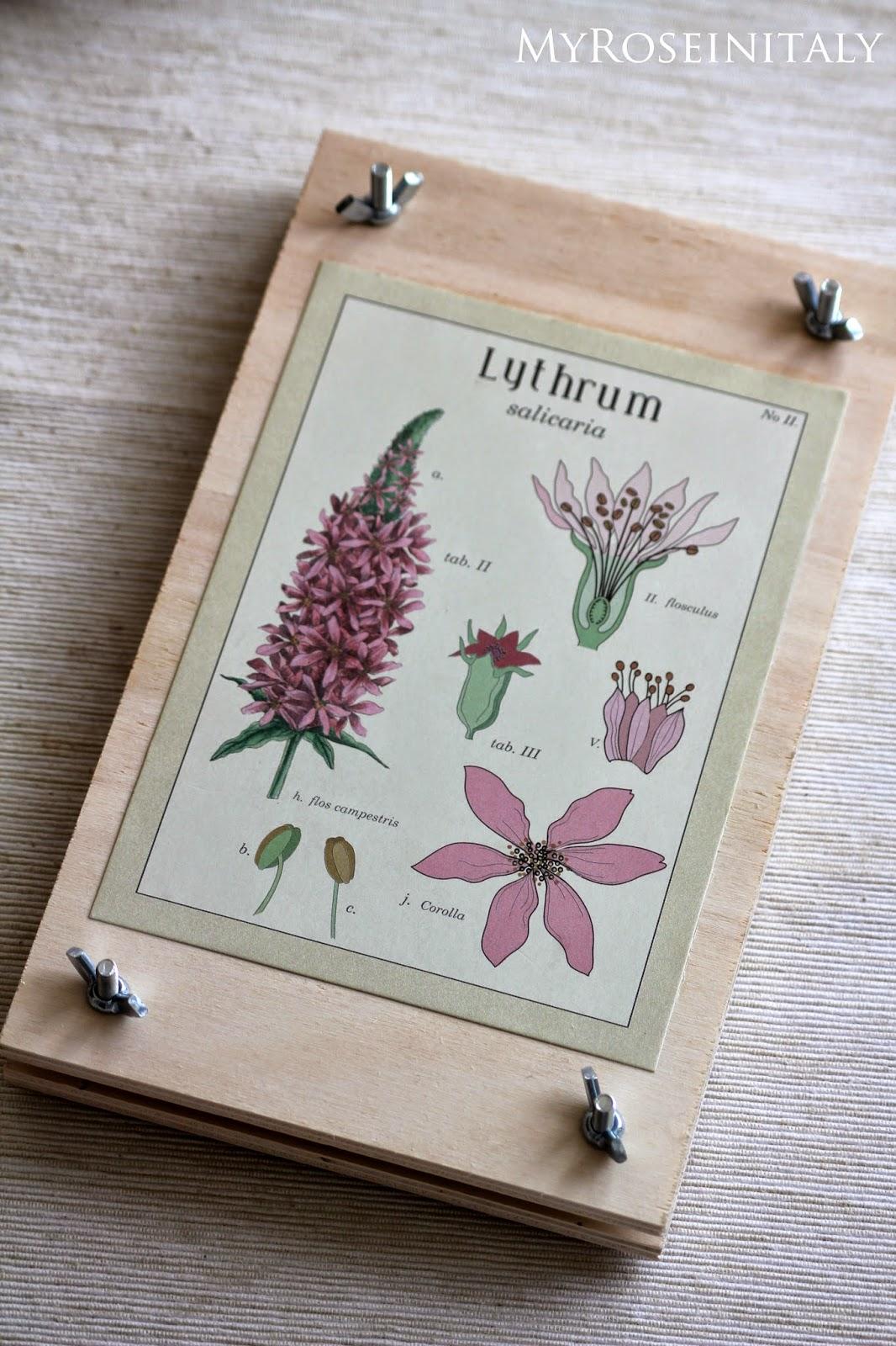 Come Costruire Un Erbario my roseinitaly: come realizzare una pressa per fiori e piante.