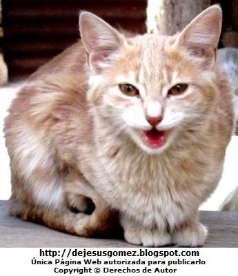 Foto de gato maullando de día. Foto de gato de Jesus Gómez