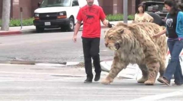 Viral dah! 'Kucing' paling besar di dunia.. kanak2 pun tak takut, buka mata dah!