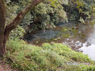 別な場所の湧水