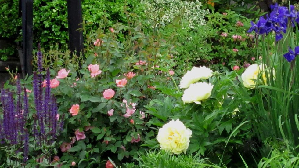 Canmore real estate news gardening and yard trends for 2017 for Hardy low maintenance shrubs