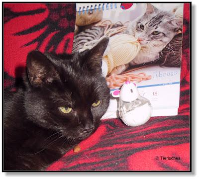 der himmlische Katzenkalender