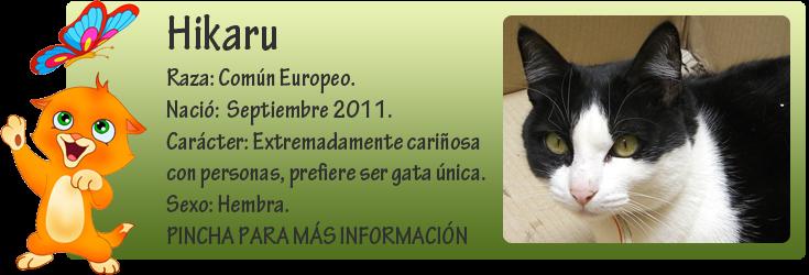 http://almaexoticos.blogspot.com.es/2014/04/hikaru-un-par-de-anos-en-busca-de-un.html