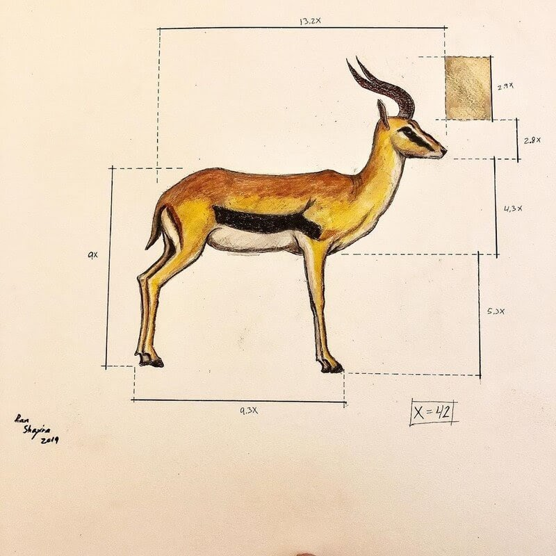 10-Gazelle-Ran-Shapira-Animal-Drawings-from-a-Sculptor-s-Perspective-www-designstack-co
