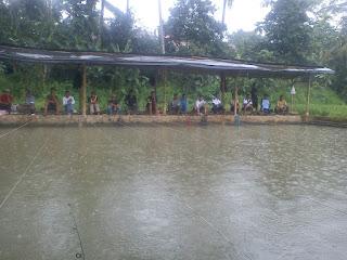 Umpan-Ikan-Mas-Musim-Hujan