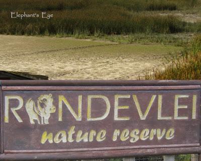 Rondevlei's elusive hippos leave tracks