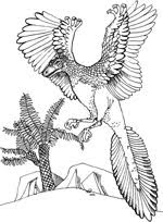 Printable Archaeopteryx Coloring Sheet For Kids