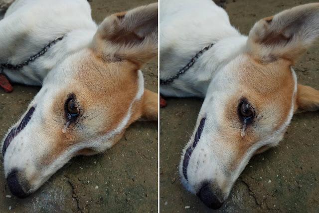 anjing mati keracunan