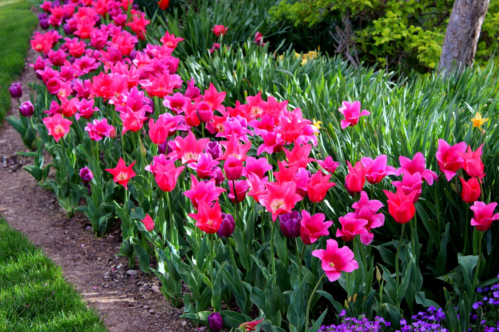 thanksgiving point tulip festival discount