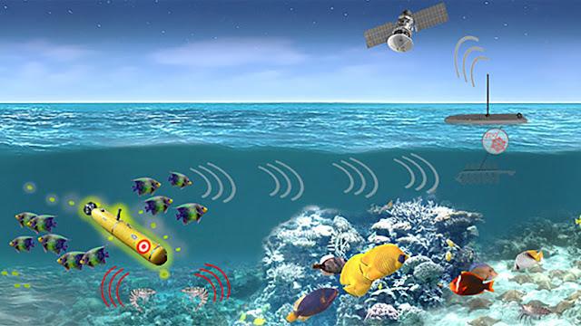 EE.UU. investiga métodos de detección submarina usando organismos acuáticos