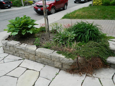 New front garden makeover in Wychwood before by Paul Jung Gardening Services--a Toronto Gardening Company