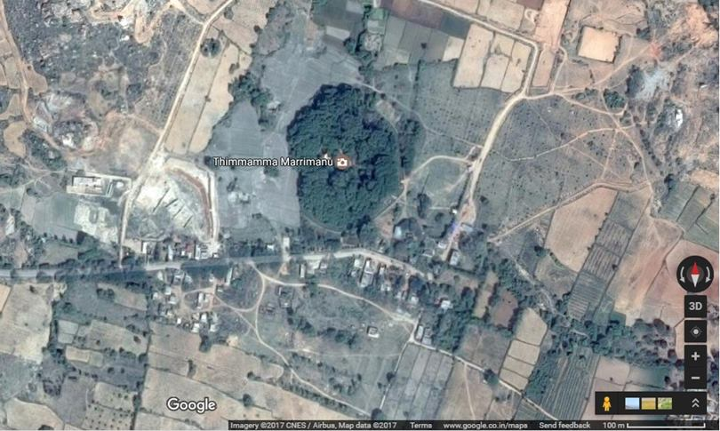 aerial view of Thimmamma Marrimanu banya tree