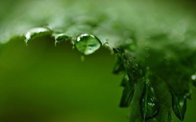 Water Drops Macro Widescreen HD Wallpaper 2