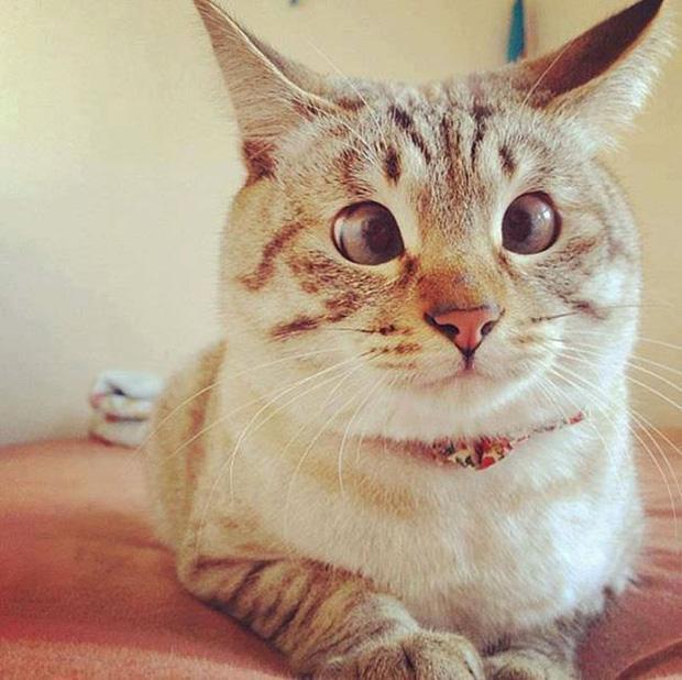 15 chú mèo mắt lác bị rơi vào cảnh lườm rau gắp thịt