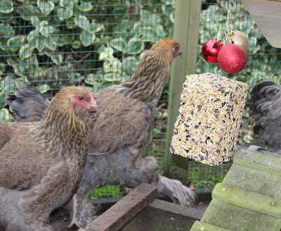 Boredom Buster for hens
