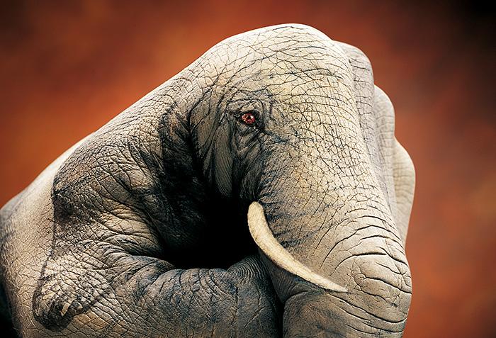 amazing-body-Elephant