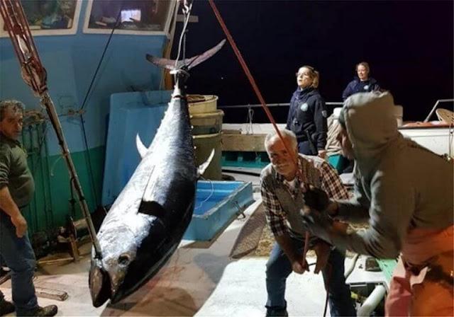 Ψάρεψαν τον μεγαλύτερο τόνο των ελληνικών θαλασσών – Εντυπωσιακές φωτογραφίες!