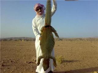 kadal biawak  Dhab
