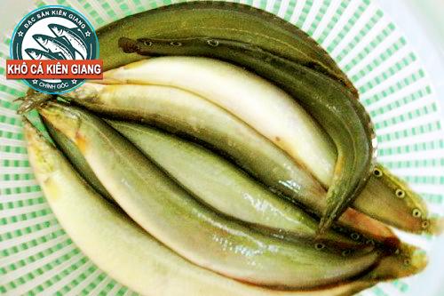 Cá Chạch Đồng tươi nguyên liệu làm Khô Cá Chạch Đồng tại Khô Cá Kiên Giang