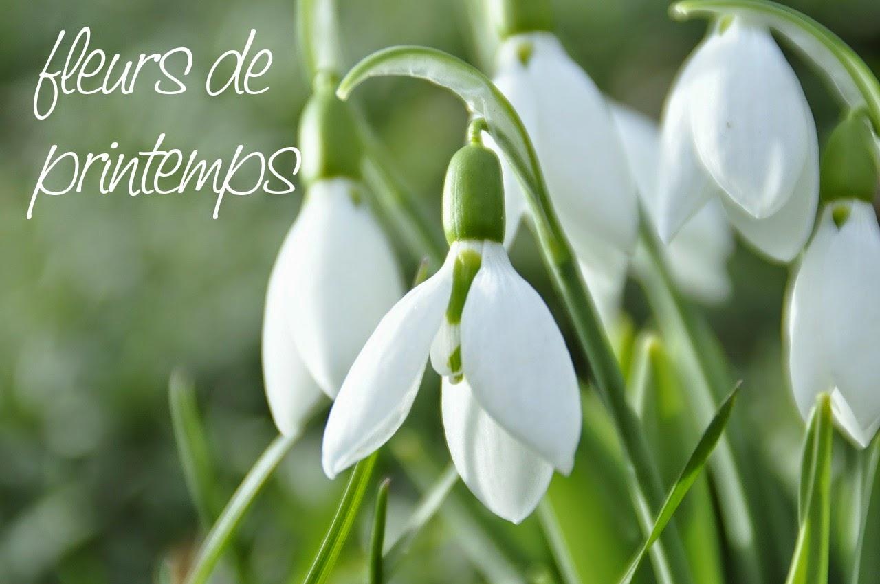 Słówko na niedzielę: fleurs de printemps