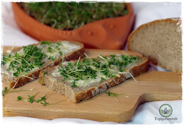 Gartenblog Topfgartenwelt Brot aus dem Dampfbackofen: Hausbrot Rezept ohne Sauerteig