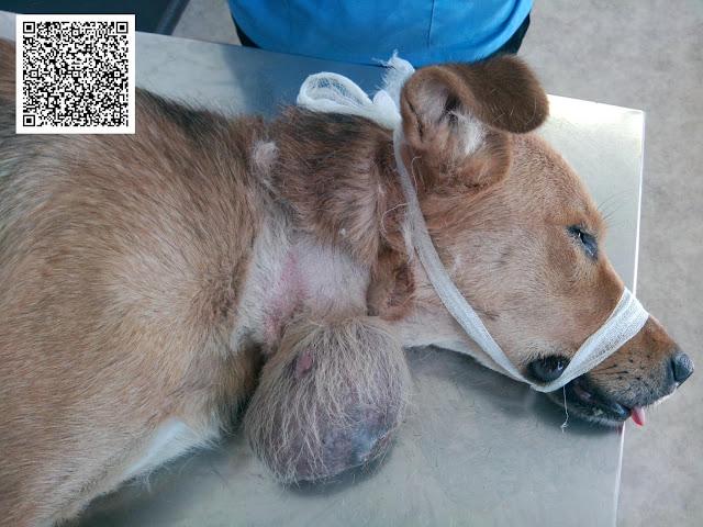 Питание собаки после операции: правильное меню для