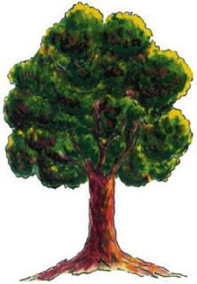 El árbol de la quina del Escudo del Perú