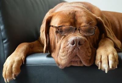 Kanker Canine Pada Anjing