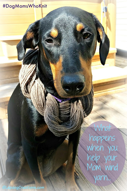 doberman puppy rescue dog with yarn