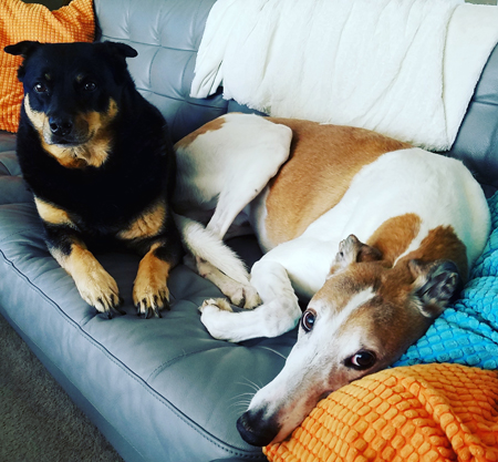 image of Zelda the Black and Tan Mutt and Dudley the Greyhound lying next to each other on the sofa, looking at me plaintively